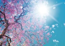 Promocion Primavera